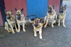 Pappa Bond och mamma Body med sina söner Paso Doble, Limbo och Tango