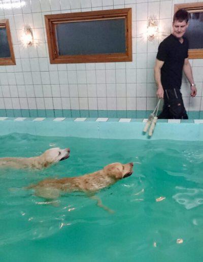 Öl-hundarna