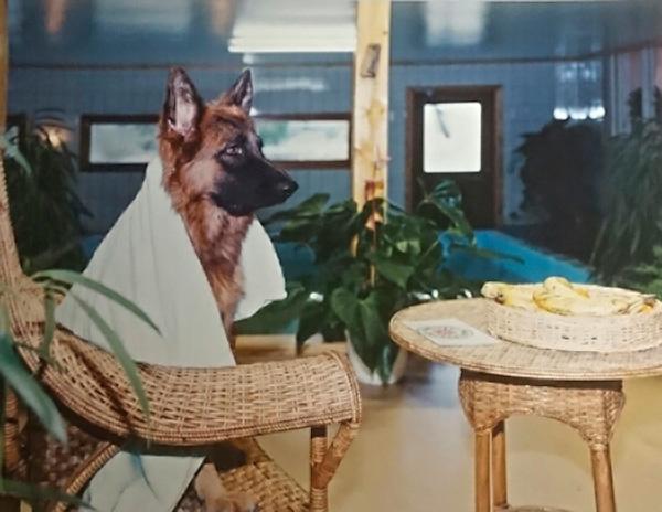 Blekinge Hundsim - våra simkunder
